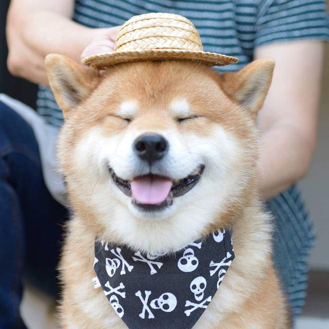 Bài văn tả con chó số 1