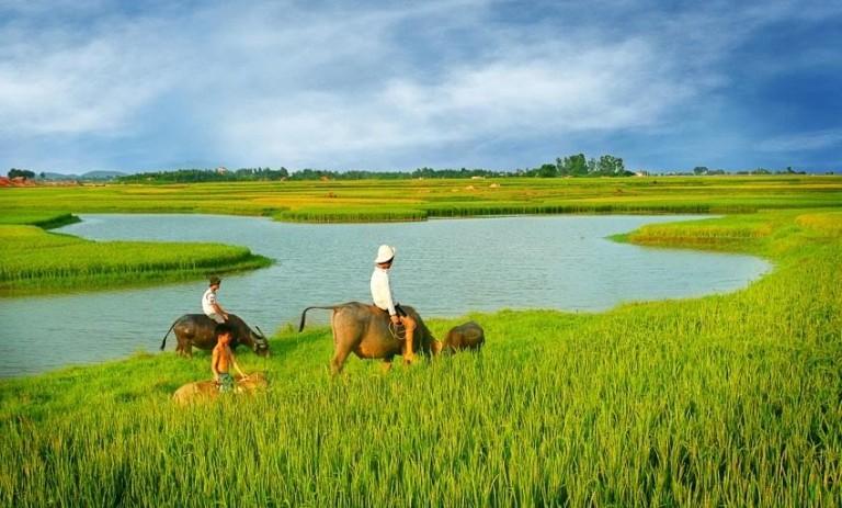 Bài văn thuyết minh về con trâu ở làng quê Việt Nam số 5