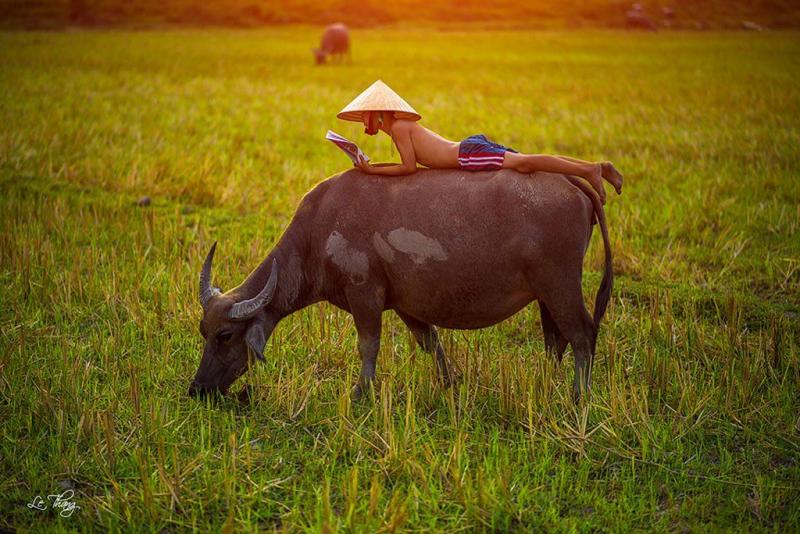 Bài văn thuyết minh về con trâu ở làng quê Việt Nam số 7
